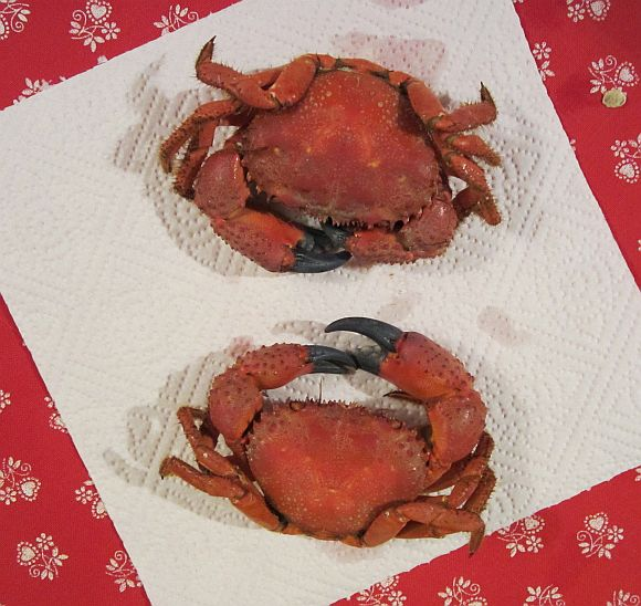 I'm sorry for the crabs, but when boiled they turn out to be a great color.