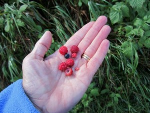 Late summer is prime time for wild blueberries and raspberries along the trail.