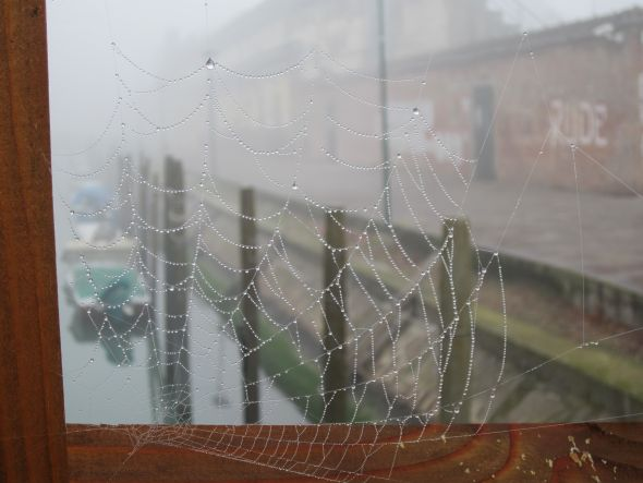 The fog was too thick to allow us to go rowing (not that we've never rowed in the fog). But it did provide some beading on the otherwise invisible spiderwebs on the bridge by Sant' Elena.