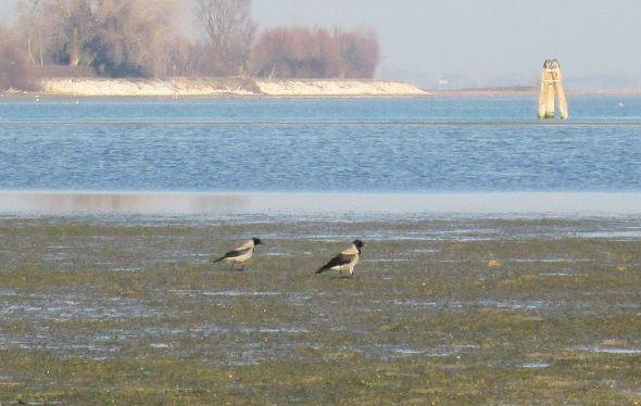 IMG_5608  putt lagoon