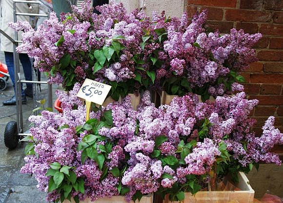 No lilac trees at all in Venice, as far as I can tell, but I'll take what I can get at the Rialto for the few days the lilacs are on sale.