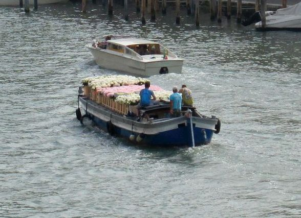 Most things have to get from A to B by boat here, at least for part of the trip.  Here somebody's garden is being taken down the Grand Canal.  A garden, or one heck of a lot of windowboxes.  Or centerpieces.  Or corsages.